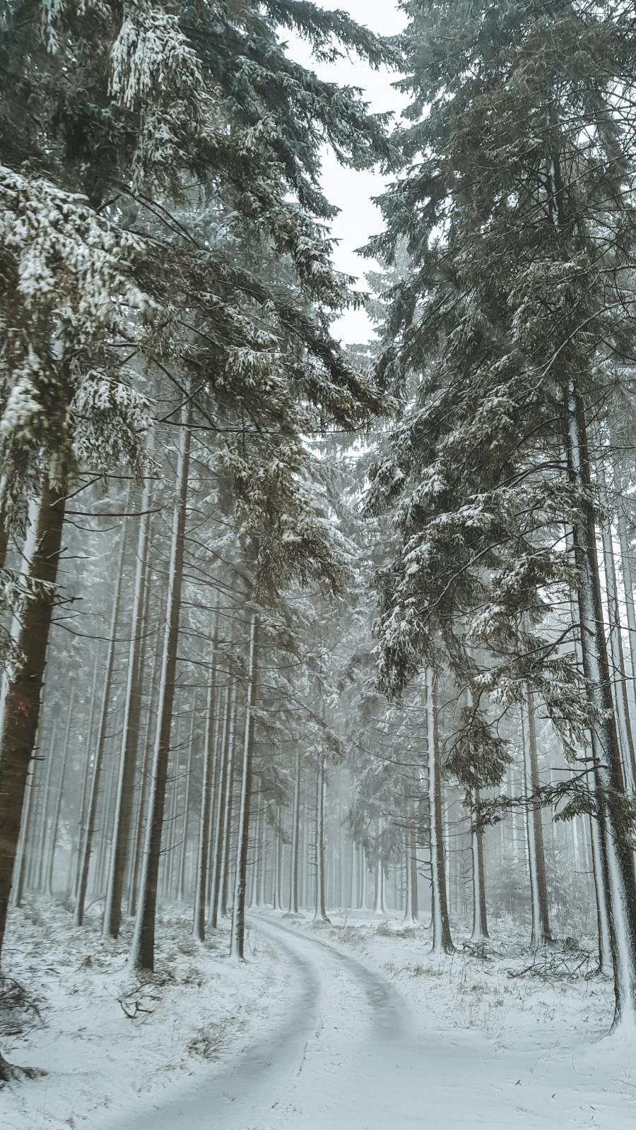 Ardennen sneeuw wandelen