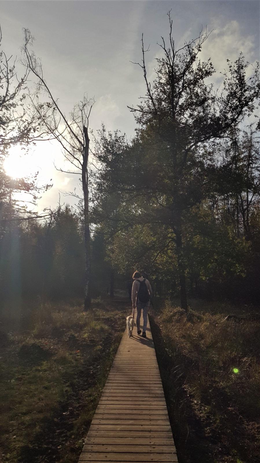 wandeling oost vlaanderen