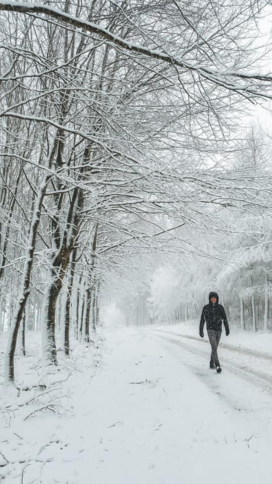 wandelen sneeuw hoge venen