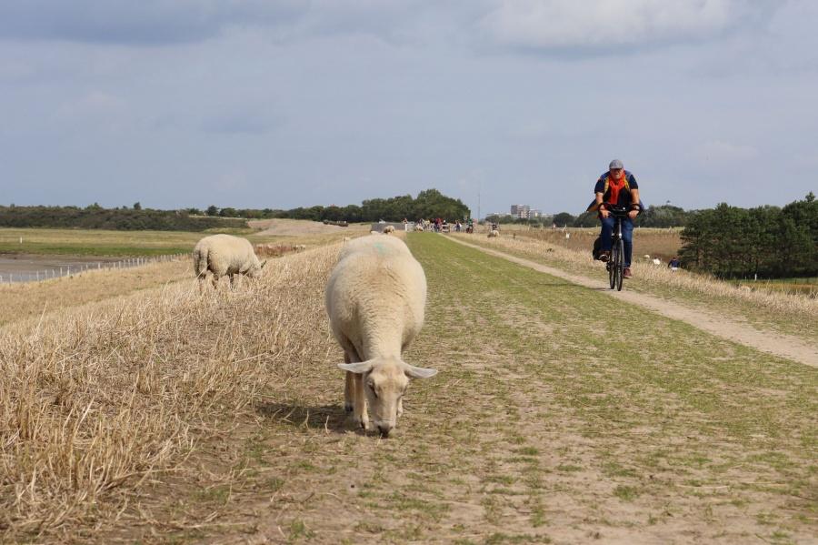 fietsen het zwin