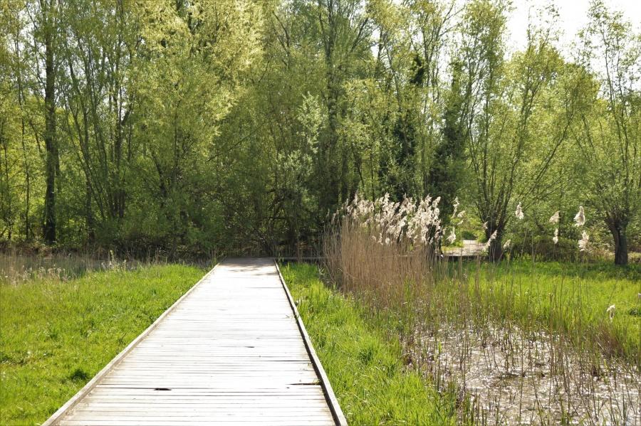 Natuurreservaat Bourgoyen