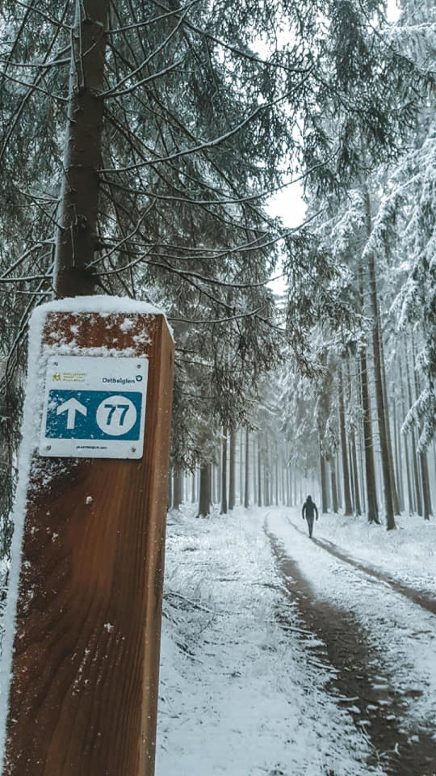 sneeuwwandeling Ardennen